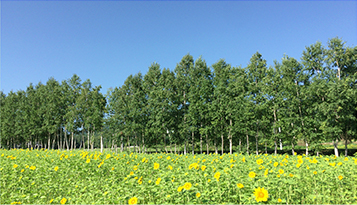Surrounding Environment & About Furano